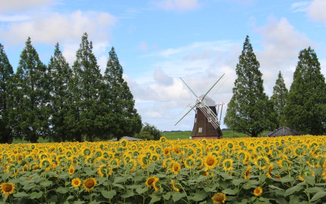 Menikmati Bunga di Musim Panas