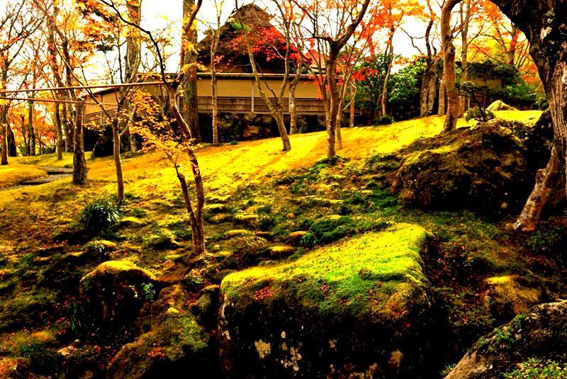 Hakone Moss Garden-Museum of Art